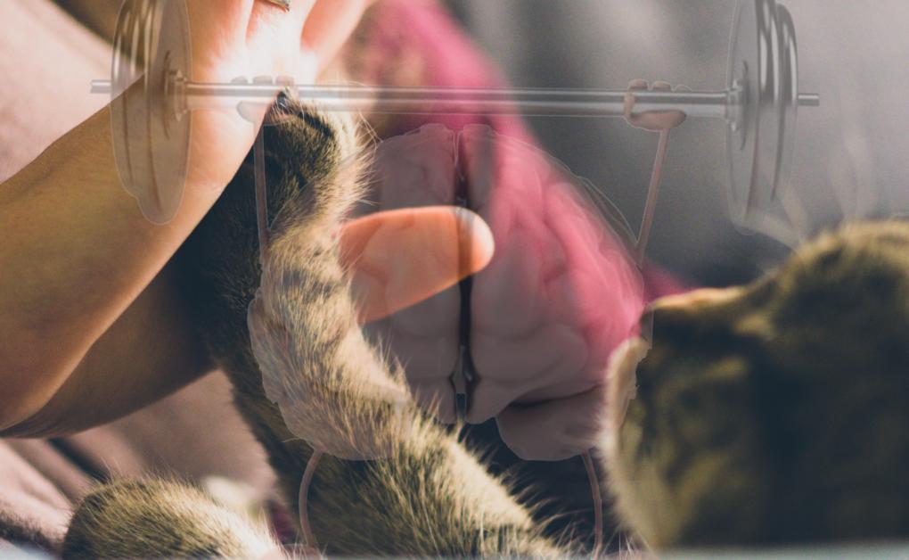 estimular la mente de tu gato