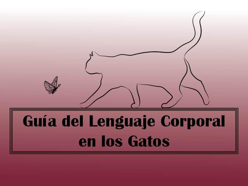 lenguaje corporal en los gatos