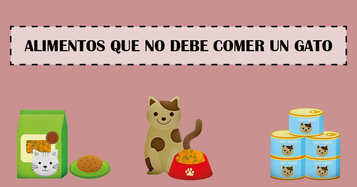 alimentos que no debe comer un gato