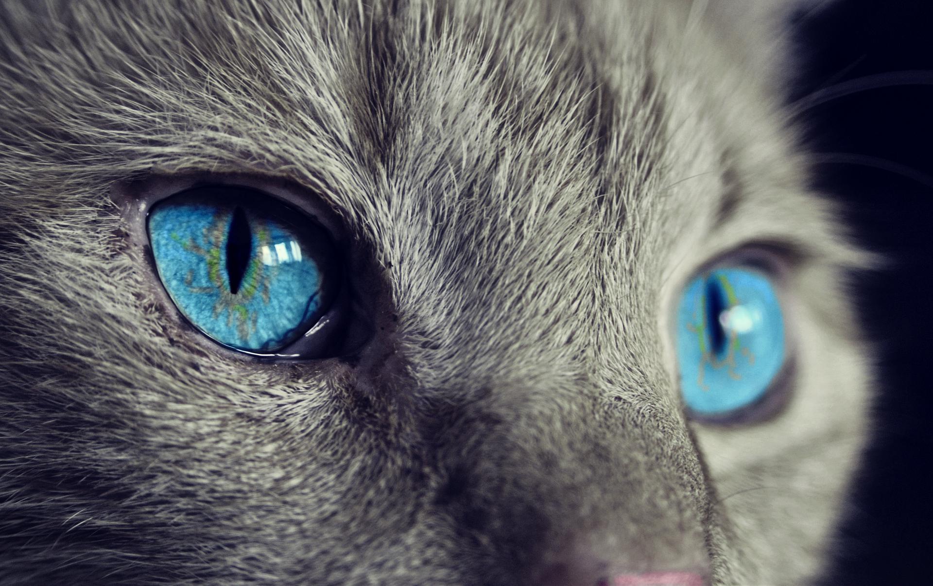 tercer parpado de los gatos