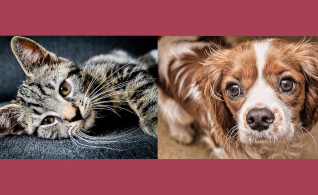 bigotes en los perros y gatos