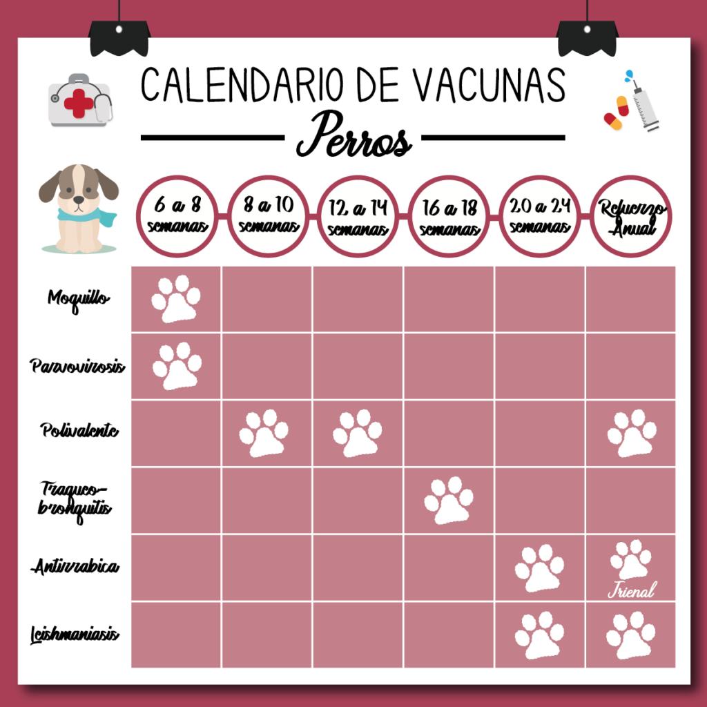 Vacunas Gatos Calendario.Vacunas Para Mascotas Nº1 C C Veterinario Zaragoza