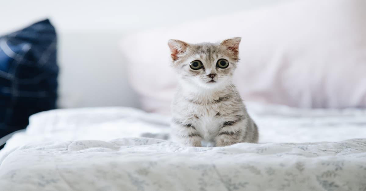 un nuevo gato en la familia