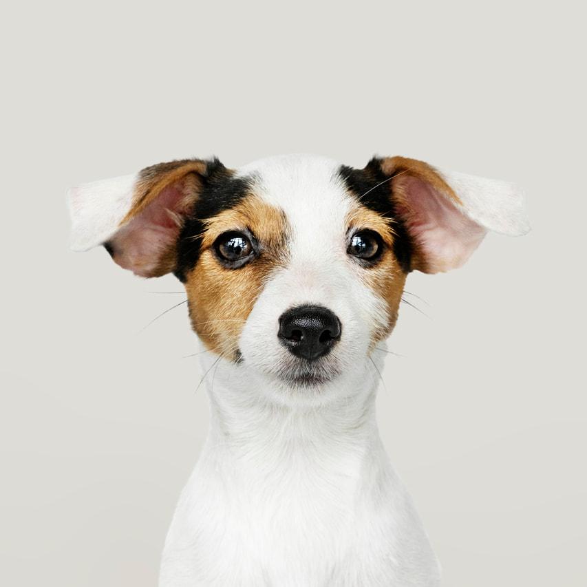 cirugía oftalmológica animales